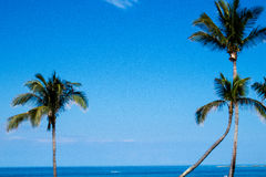 Palm Trees And Ocean View. Beautiful palm trees in front of the ocean, the sky, and the horizon Stock Image
