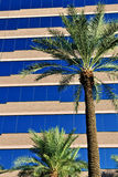 Palm trees and office building Stock Image