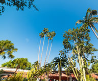 Palm trees in Old Town San Diego Royalty Free Stock Image