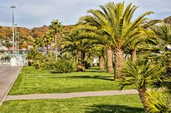 Palm trees in the Olympic Park. Stock Photography