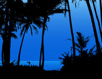 Palm Trees On The Beach. Royalty Free Stock Photos