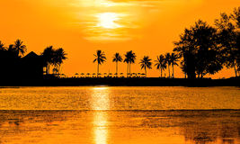 Palm trees in orange glow sunset Royalty Free Stock Photos
