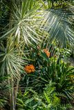 Palm trees and other exotic plants in the greenhouse. Exotic plants in the greenhouse Stock Images