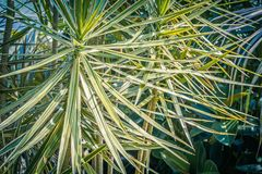 Palm trees and other exotic plants in the greenhouse. Exotic plants in the greenhouse Stock Image
