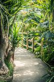 Palm trees and other exotic plants in the greenhouse. Exotic plants in the greenhouse Royalty Free Stock Photography