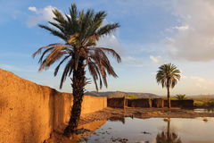 Palm trees. Oued Ouarzazate. Morocco. Royalty Free Stock Images