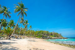 Palm trees over beautiful white sand beach Royalty Free Stock Photography
