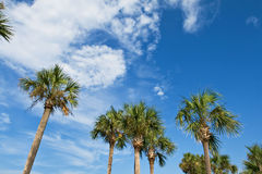 Palm trees over blue sky Stock Photos