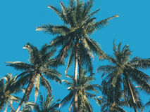 Palm trees over blue sky stock images
