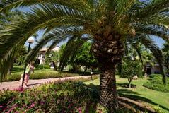 Palm trees over blue sky Stock Photos