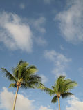 Palm trees over a blue sky Stock Image