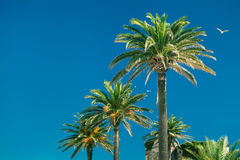 Palm trees over blue sky Royalty Free Stock Photography