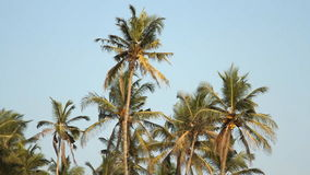Palm trees over blue sky. At sunny day stock video