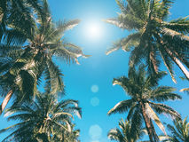 Palm trees over boue sky stock image