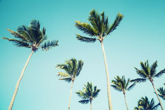 Palm trees over clear sky background. Vintage style Stock Images