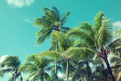 Palm trees over cloudy sky background. Vintage style Royalty Free Stock Photos