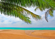 Palm trees over the sand Royalty Free Stock Images