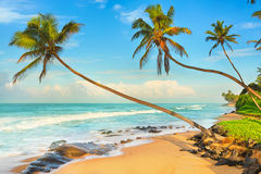 Palm trees over the sea Royalty Free Stock Image