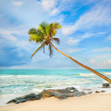 Palm trees over the sea Royalty Free Stock Photo
