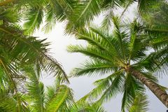 Palm trees over the sky Stock Photography