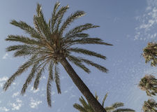 Palm trees over sky Royalty Free Stock Photo