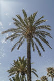 Palm trees over sky Royalty Free Stock Photography