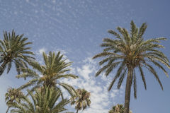 Palm trees over sky Stock Images