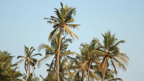 Palm trees over sky at sunny day. Palm trees over blue sky at sunny day stock video footage