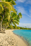 Palm trees over tropical lagoon at Fiji. Islands Royalty Free Stock Photography