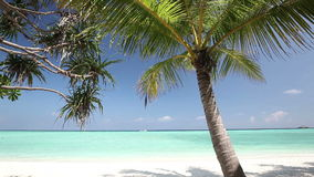 Palm trees over tropical lagoon with white beach. Palm trees over tropical lagoon with white sandy beach stock footage