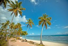 Palm trees over tropical lagoon with wild beach Stock Photo