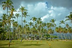 Palm trees over tropical lagoon with wild beach. Amazing landscape in the wil beach Playa Bonita, Las Terrenas, Dominican Republic Royalty Free Stock Photography