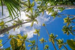 Palm trees over tropical lagoon with wild beach. Amazing landscape in the wil beach Playa Bonita, Las Terrenas, Dominican Republic Royalty Free Stock Photo