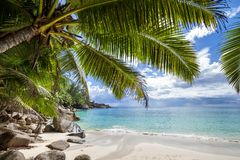 Palm trees over untouched tropical beach Seychelles stock image