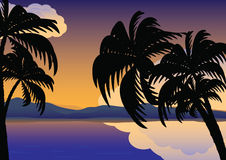 Palm trees over the water Stock Photo