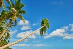 Palm trees over the water on Boracay beach Stock Photo