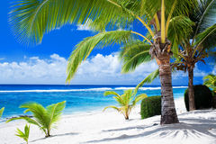 Palm trees overlooking amazing blue lagoon. And white beach royalty free stock photo