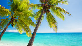 Palm trees overlooking blue lagoon. Palm trees overlooking amazing blue lagoon and white beach Stock Images