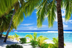 Palm trees overlooking lagoon and beach. Palm trees overlooking amazing blue lagoon and white beach Royalty Free Stock Photography