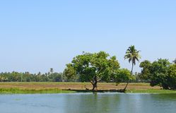 Palm Trees and Paddy Fields near Backwaters in Kerala, India Stock Photo