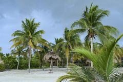 Palm trees and palapas in white sand on a Caribbean beach in Mexico stock photography