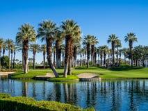 Palm trees, Palm Desert golf course Royalty Free Stock Photos