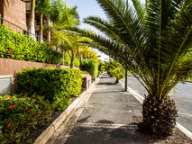 Palm trees in the Palm Mar empty street Royalty Free Stock Photos