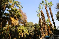 Palm trees. On blue sky, Africa Royalty Free Stock Photos