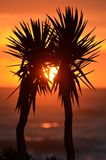 Palm Trees, Palms, Exotic, Sunset Royalty Free Stock Image