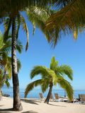 Palm trees Paradise Royalty Free Stock Images