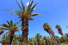 Palm Trees in Paradise Royalty Free Stock Photos