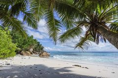 Palm trees on paradise beach at anse patates, la digue, seychell Royalty Free Stock Images