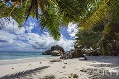 Palm trees on paradise beach at anse patates, la digue, seychell Royalty Free Stock Photos
