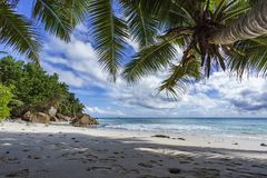 Palm trees on paradise beach at anse patates, la digue, seychell Stock Image